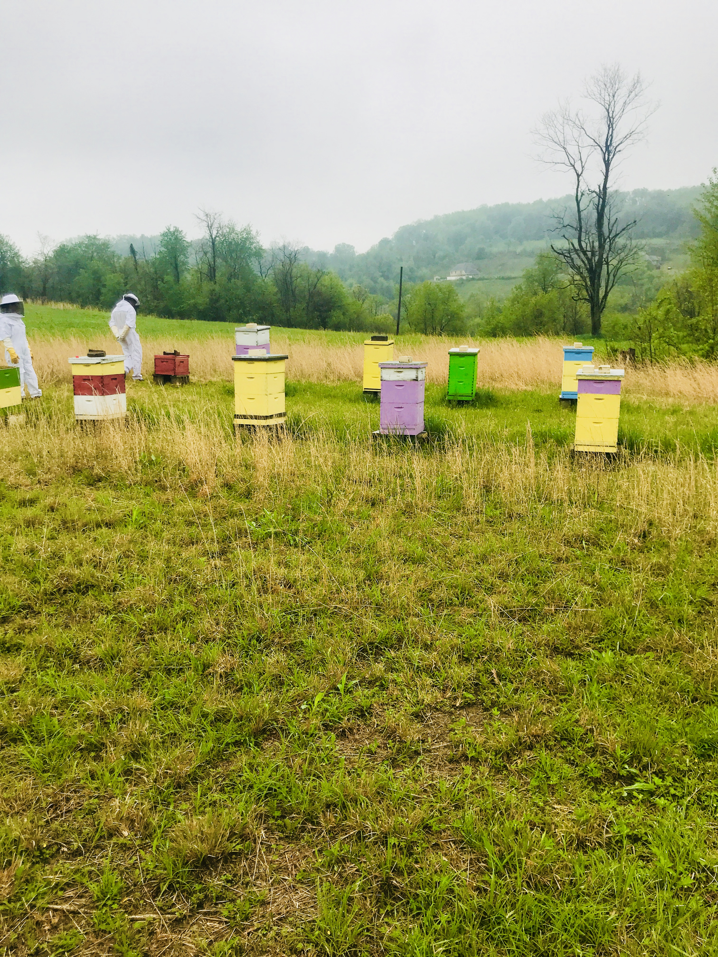 My Day with the Beekeeper